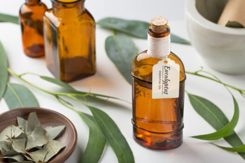 What Does Eucalyptus Smell Like? - Best Grooming Tips 2020