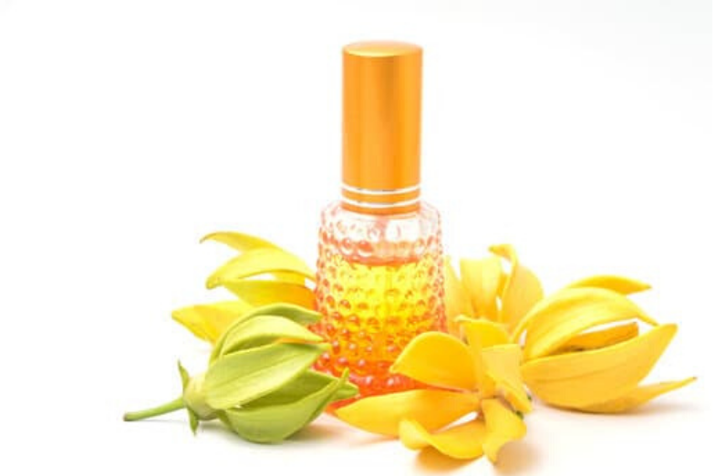 what does ylang ylang smell like